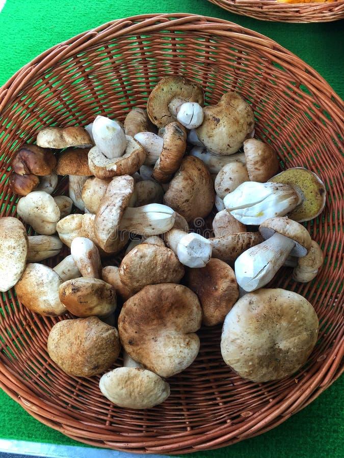 Korb von gesäuberten Bolete-Pilzen stockfotos