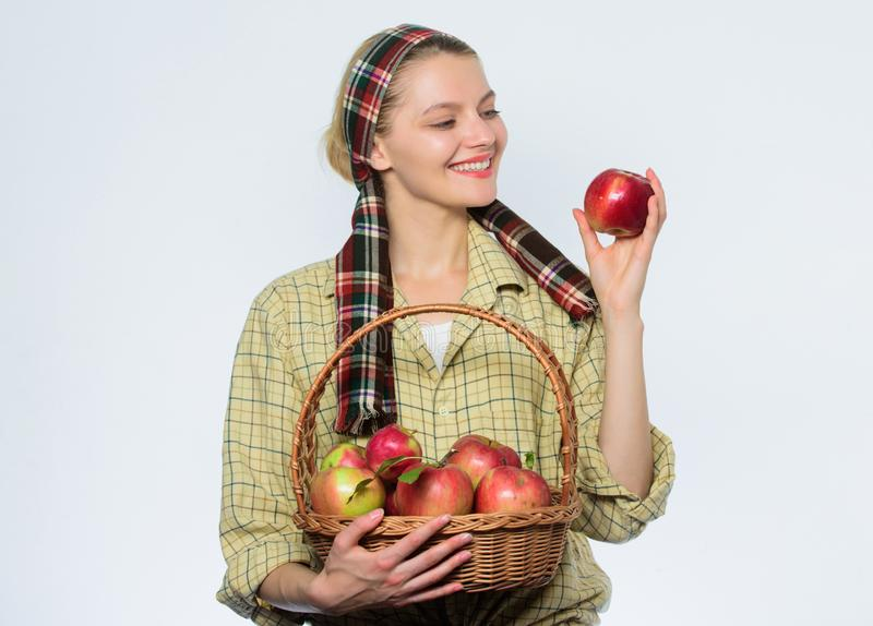 Korb von grünen Äpfeln Frühlingsernte-Sommerfrucht Organisch und vegetarisch Gesunde Zähne Obstgarten, Gärtnermädchen mit stockfotografie