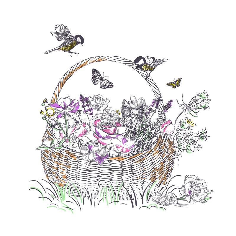 Korbrosenlavendel-Blumenvektor gravieren Karte lizenzfreie abbildung