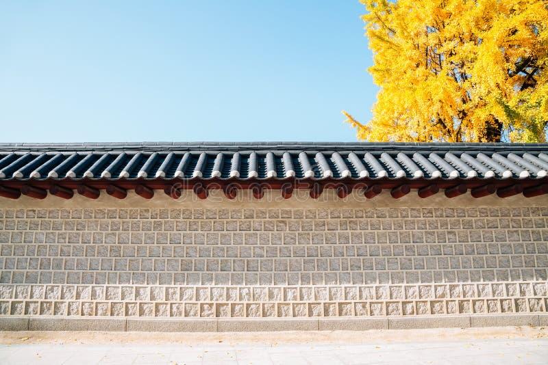 Koreańska tradycyjna ściana z jesieni ginkgo żółtym drzewem w Seul, Korea obrazy stock