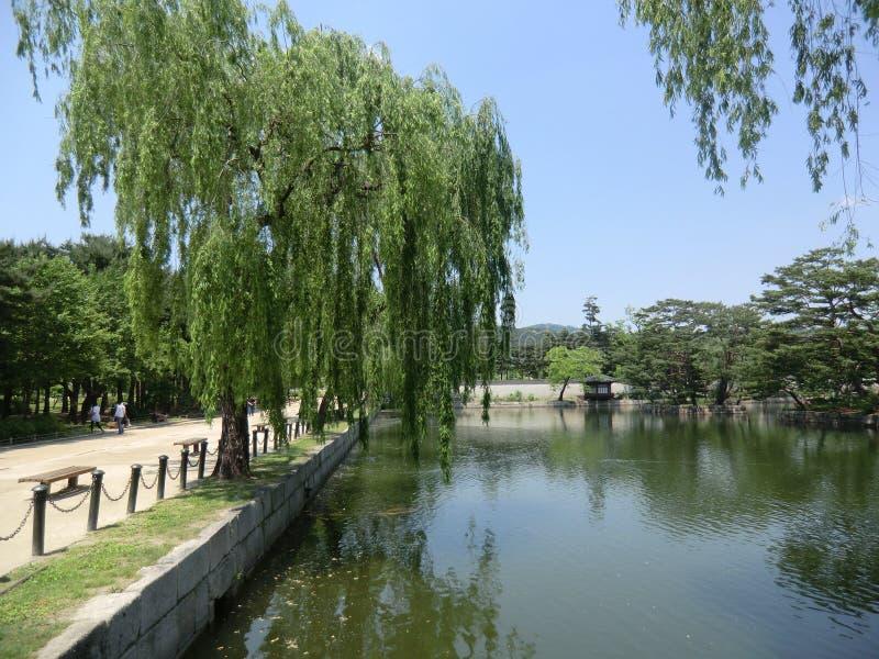 Koreański jezioro Z Płacze Wierzbowymi drzewami zdjęcie stock