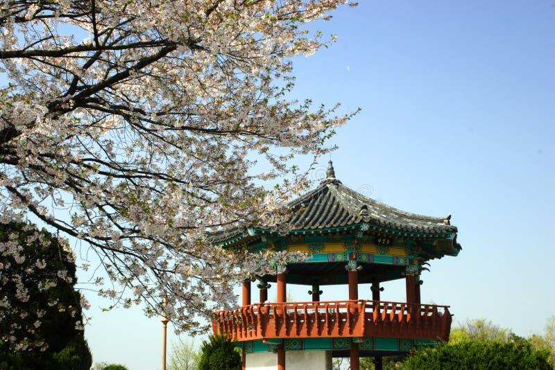 Koreaanse Pavillion tegen een blauwe hemel. royalty-vrije stock afbeelding