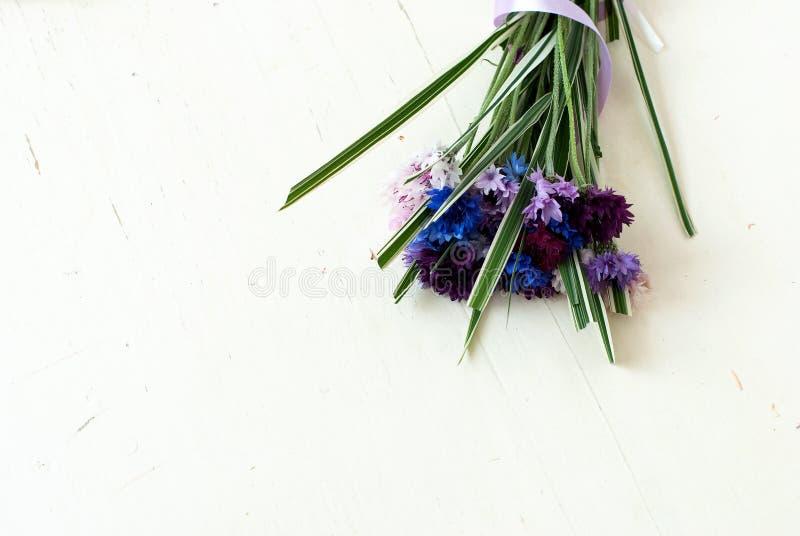 Korenbloemen op een witte achtergrond royalty-vrije stock foto's