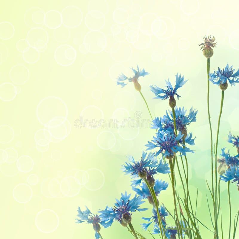 Korenbloemenachtergrond royalty-vrije illustratie