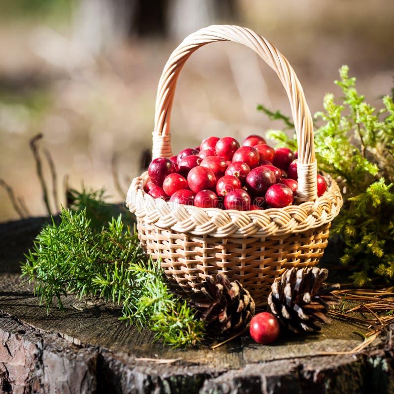Korg av cranberries arkivfoto