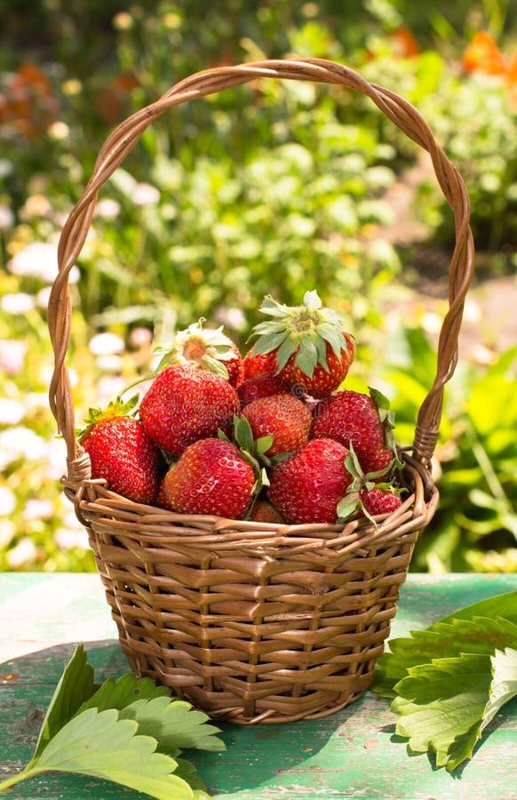 Korg av jordgubbar royaltyfri fotografi