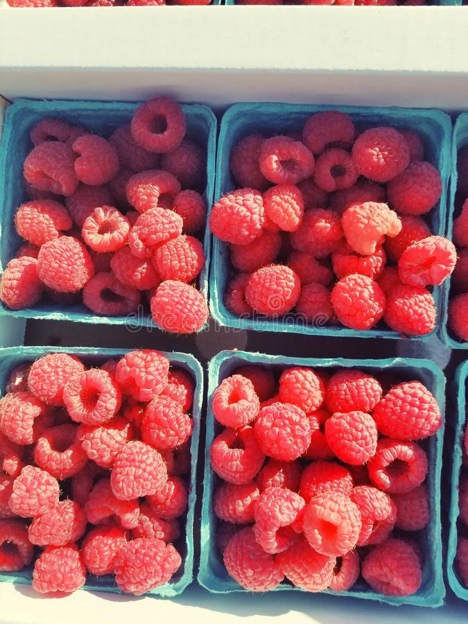 Korg av röda rasberries royaltyfri bild