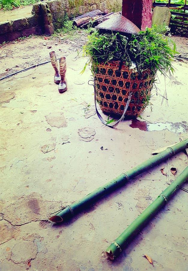 Korg av risväxter, Sa-PA-dal, Vietnam fotografering för bildbyråer
