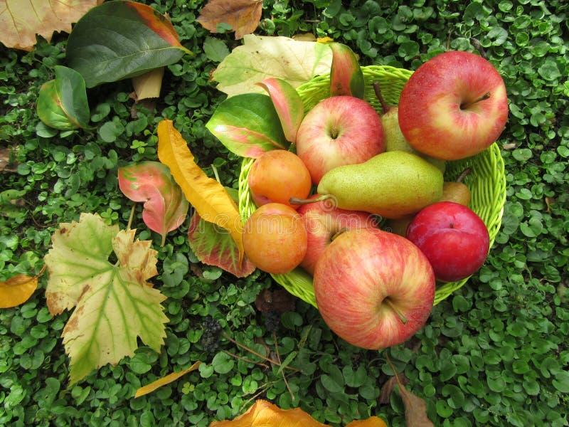 Korg med frukter och sidor arkivbilder