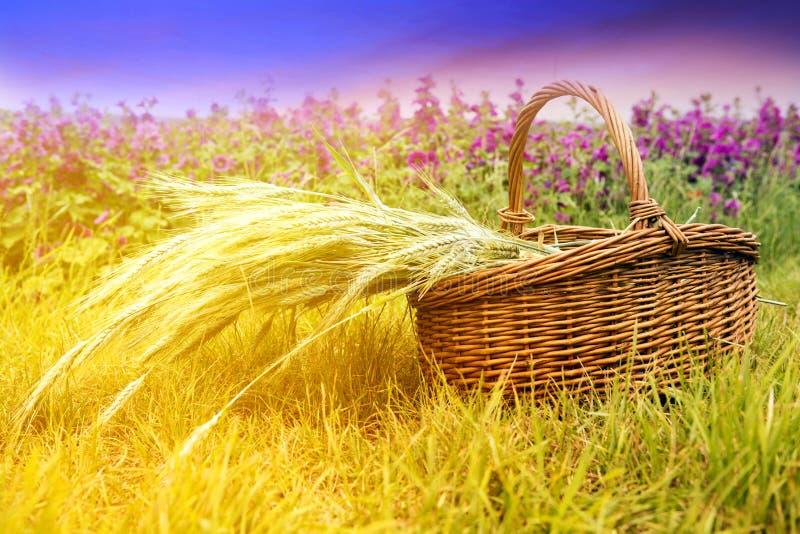 Korg med korn som är främst av cornfield fotografering för bildbyråer