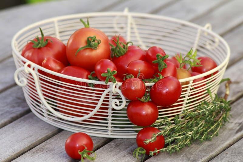 Korg med röda tomater royaltyfri bild