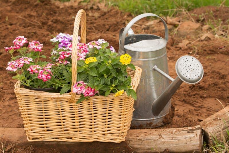 Korg mycket av färgrika blommor som är klara för att plantera för vår arkivfoton