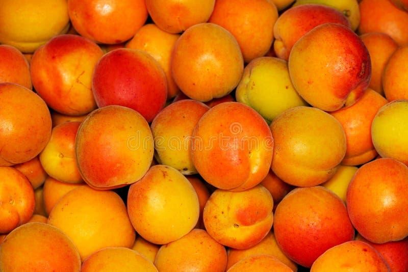 Korgar med nya mogna aprikors close upp royaltyfri fotografi