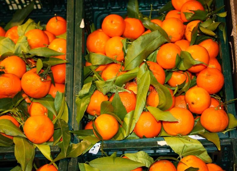 Korgar och hyllor av tangerin inom ett lager skärm av många små söt, mogna orange citrusfrukter som är klara att ätas och royaltyfri fotografi