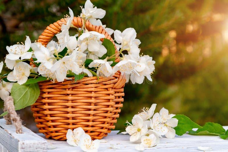 Korgen med blommor av philadelphusen någonstans kallade jasmin eller den falska apelsinen på ett vitt trämagasin utomhus i sommar royaltyfri bild