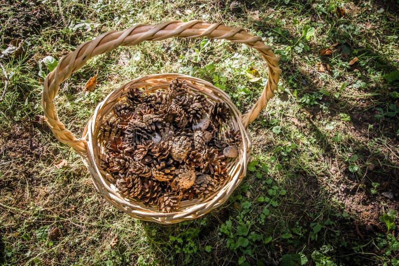 korgen med sörjer kottar som står på jordningen royaltyfri bild