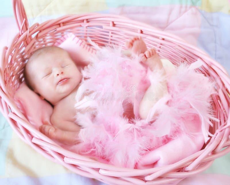 korgspädbarn royaltyfri fotografi