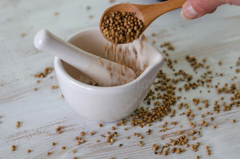 Koriander kärnar ur att dunka i mortel förbereder sig för att laga mat för mat arkivfoto
