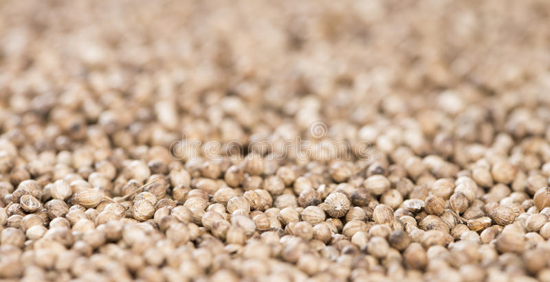 Koriander-Samen (Hintergrund) lizenzfreie stockfotos
