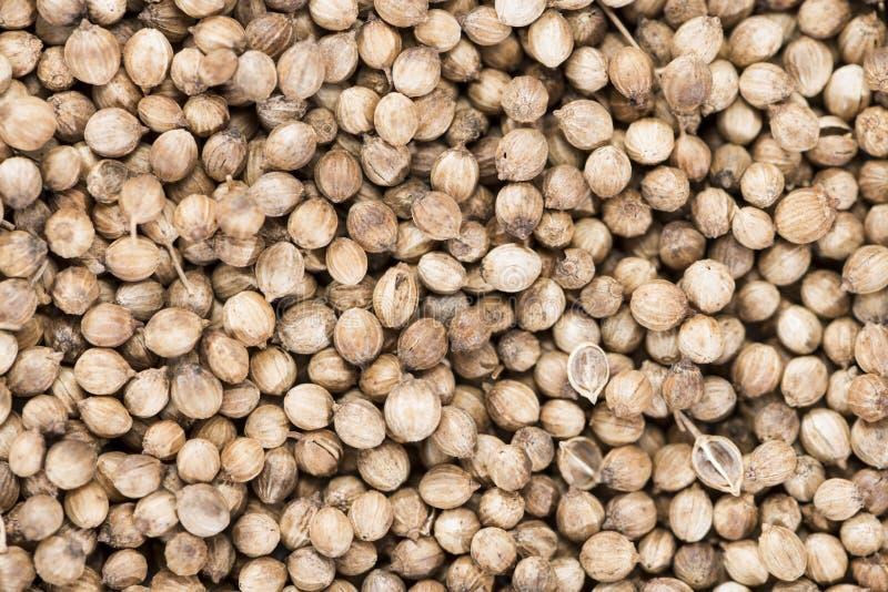 Koriander-Samen (Hintergrund) lizenzfreies stockfoto