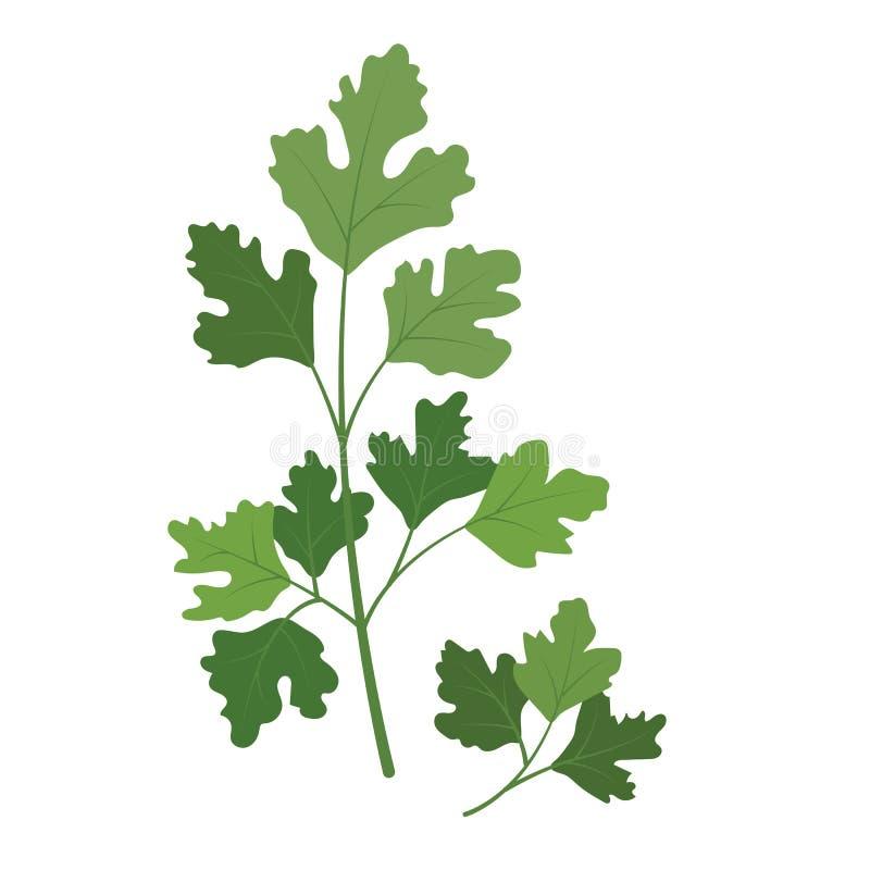 Koriander van de aard de organische plantaardige Koriander vector illustratie