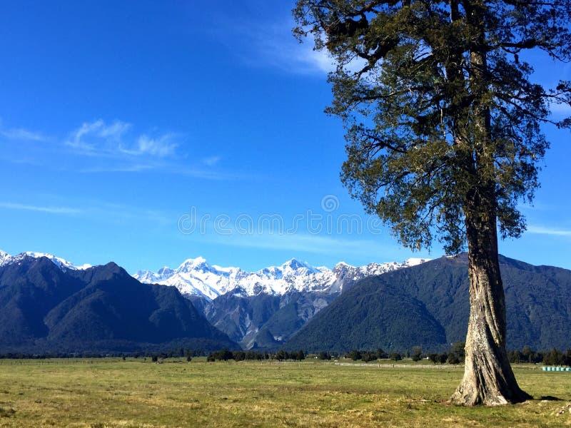 Korkade berg för snö i bakgrund av det stora trädet och fältet fotografering för bildbyråer
