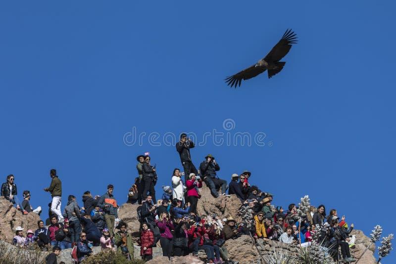 Korkade turister ignorerar kondor som flyger över dem i synvinkeln av kondor peru royaltyfri fotografi