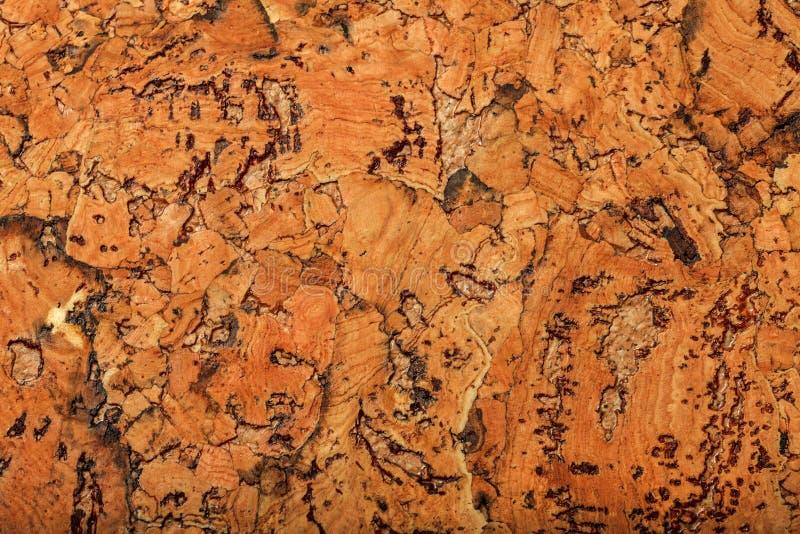 Korkbrädetextur eller bakgrund, stora beståndsdelar royaltyfri bild