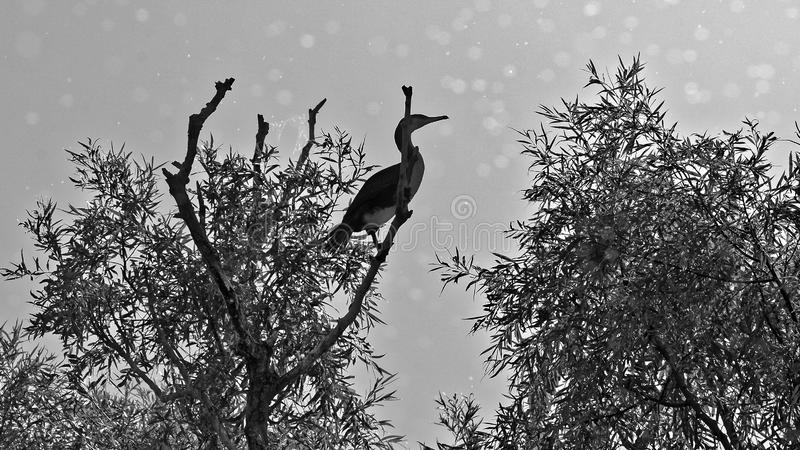 Kormoran auf Baum stockfotos