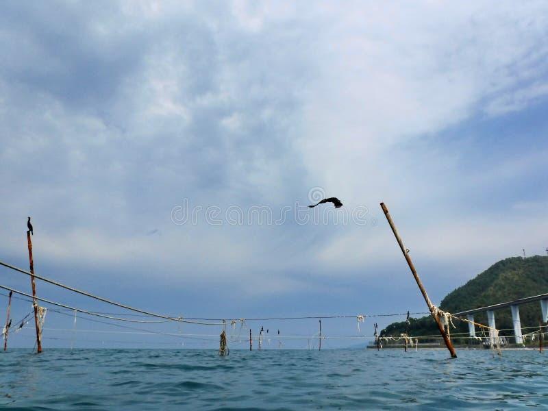 Kormoran på kuggar som rymmer fisknät royaltyfria foton