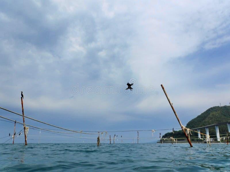 Kormoran på kuggar som rymmer fisknät arkivfoton