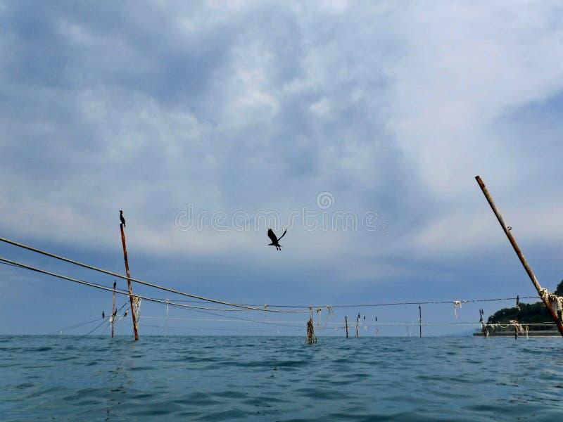 Kormoran på kuggar som rymmer fisknät fotografering för bildbyråer