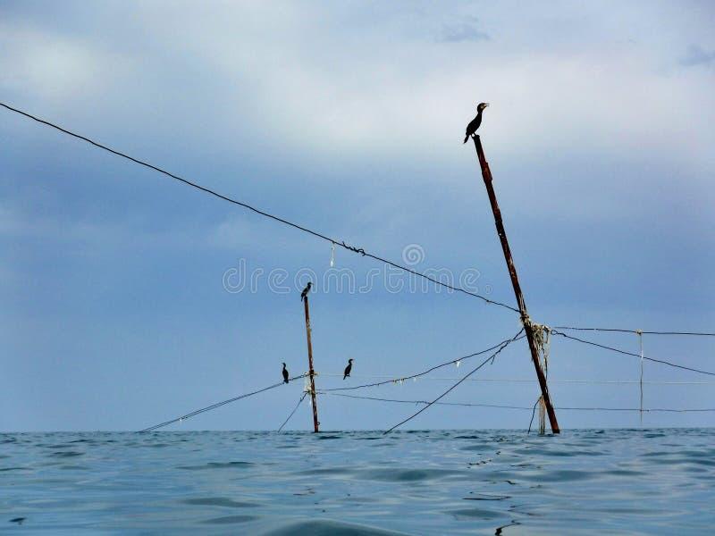 Kormoran på kuggar som rymmer fisknät royaltyfria bilder