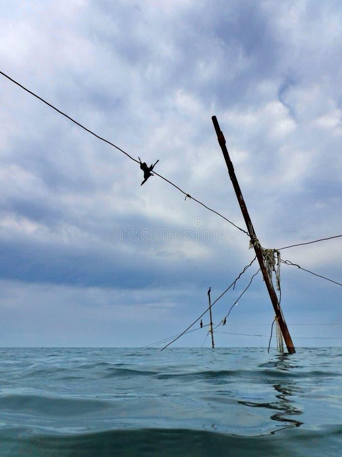 Kormoran på kuggar som rymmer fisknät royaltyfri fotografi