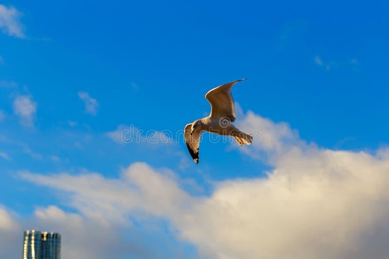 kormoran som över flyger i bakgrunden av den Brooklyn bron royaltyfri bild