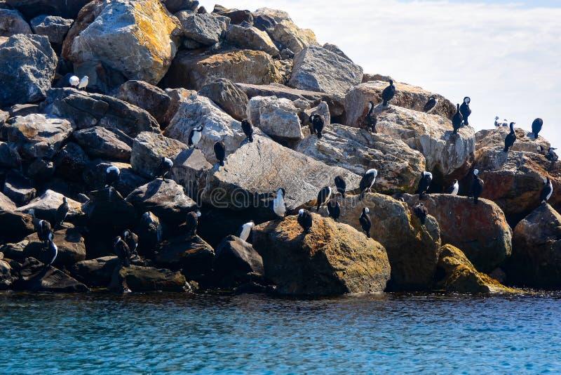 Kormorane, die auf Felsen auf einem sonnigen Morgen sich putzen lizenzfreies stockbild