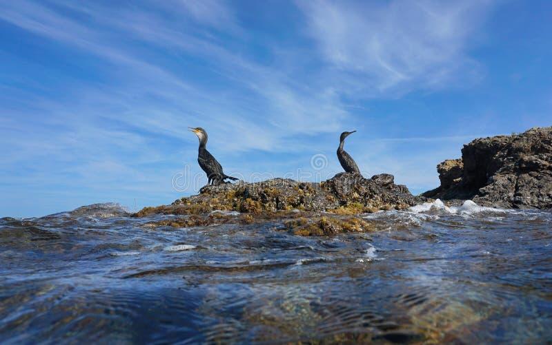 Kormoranvögel auf Mittelmeer Spanien des Felsens lizenzfreies stockfoto