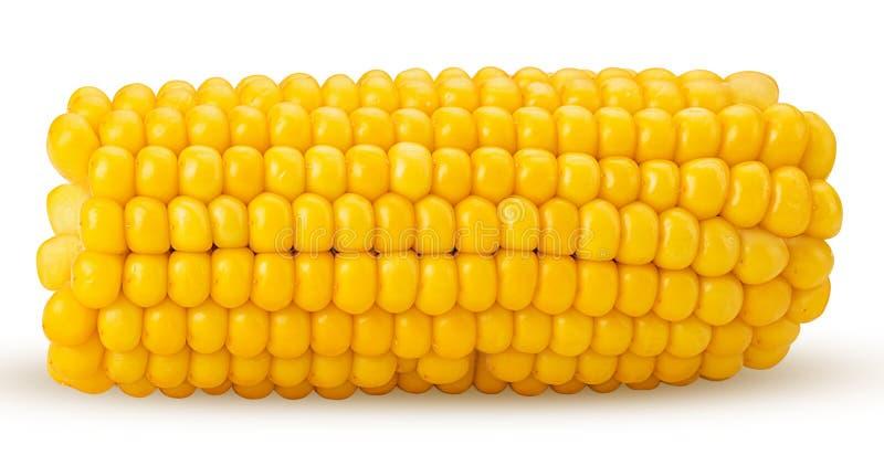 Kornähre Frischer Maiskolben, Schnitt zur Hälfte stockfotografie