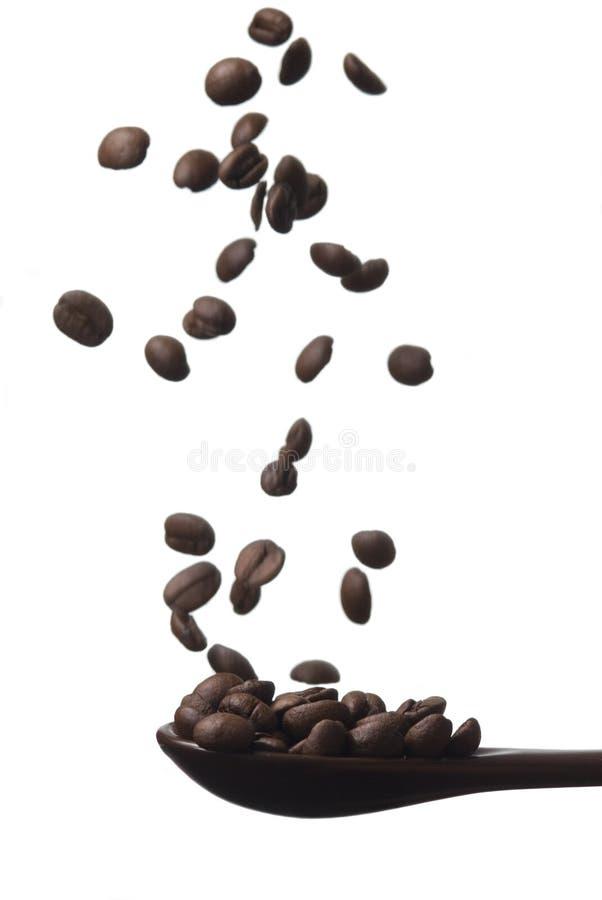 Korn des Kaffees im Fall stockfotos