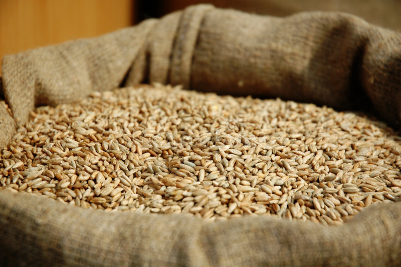 Korn des Weizens in einem Rausschmiß lizenzfreie stockfotografie