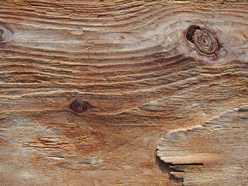 Korn eroderade wood bakgrund, buseträtextur, drivvedPA arkivbild