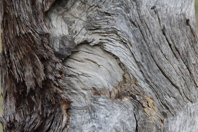 Korn i trä royaltyfri foto