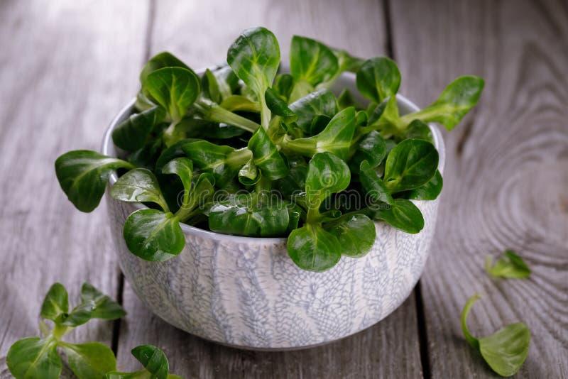 Korn, lattuga fresca lascia in una tazza su una tavola di legno immagine stock
