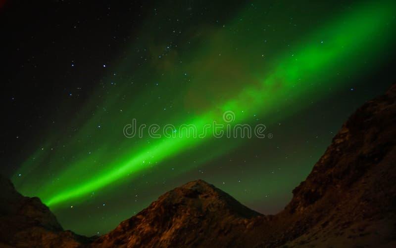 Korn och ljus för morgonrodnad för ljust glöd för oväsen gröna nordliga i klar himmel på natten i Lofoten öar, Norge royaltyfria bilder