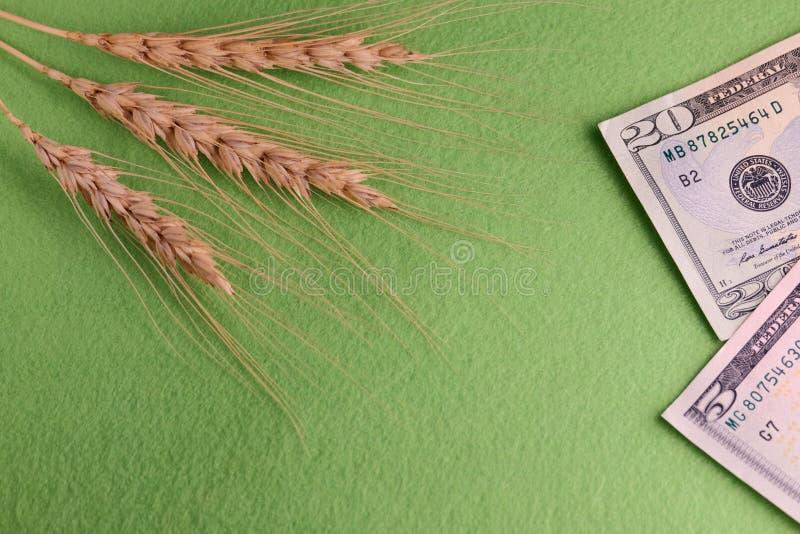 Korn och pengar Tre vetehuvud och tjugofem dollar Förenta staterna Begreppskorruption i fältet av jordbruk, purcha royaltyfri fotografi