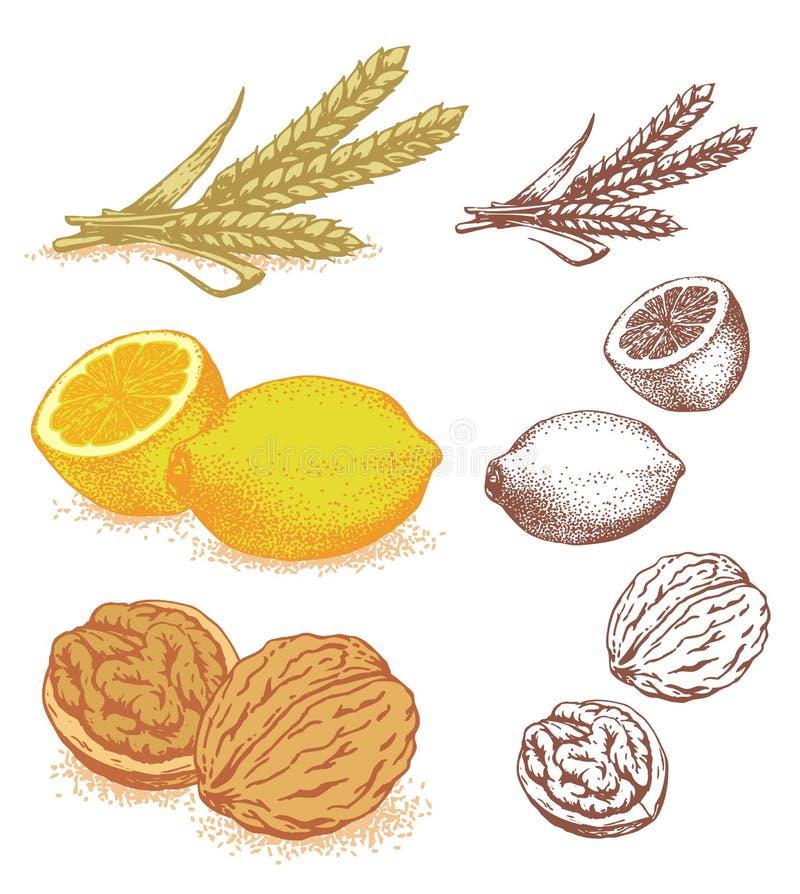 Korn, Zitronen, Walnüsse lizenzfreie abbildung