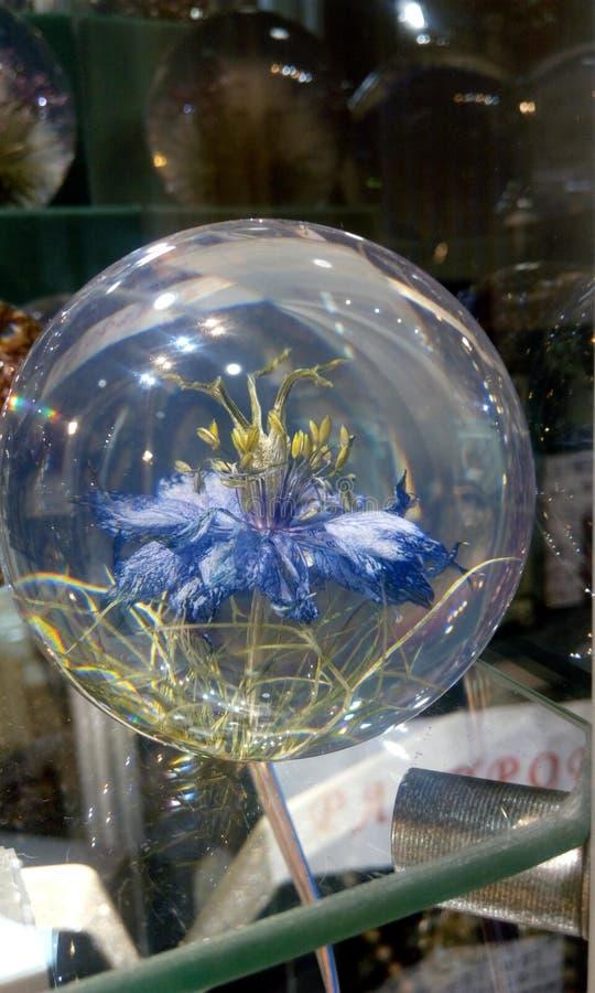 Kornblume in einer Glasschüssel stockfotos