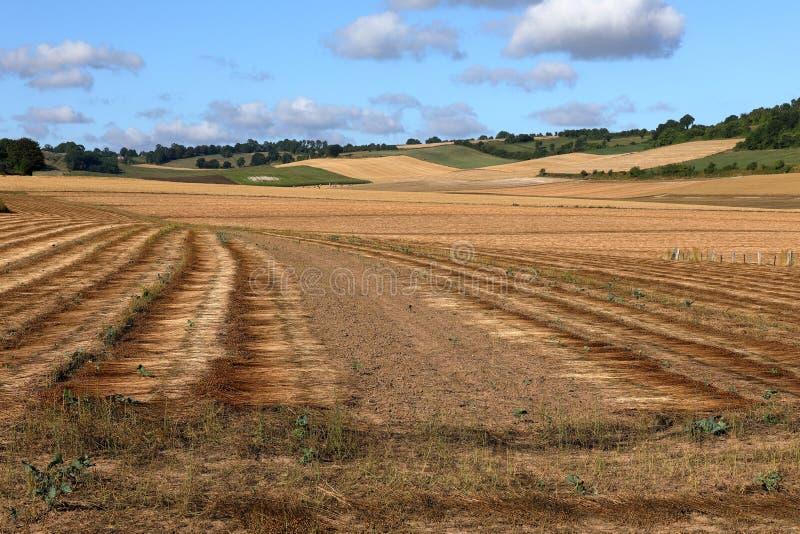 Kornfält efter skörd royaltyfria bilder