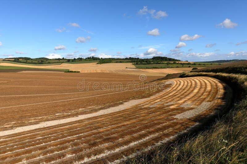 Kornfält efter skörd royaltyfria foton