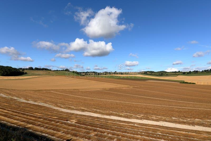 Kornfält efter skörd arkivbilder